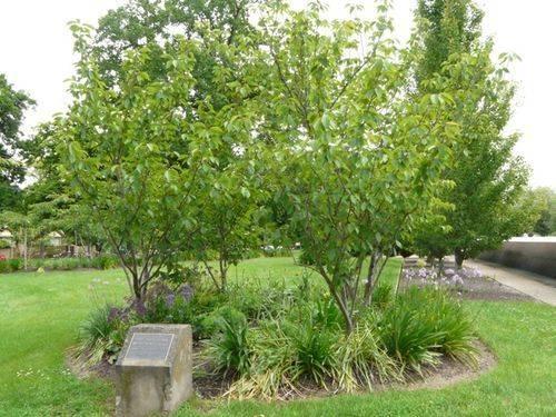 Ada John Memorial Grove : 07-December-2011