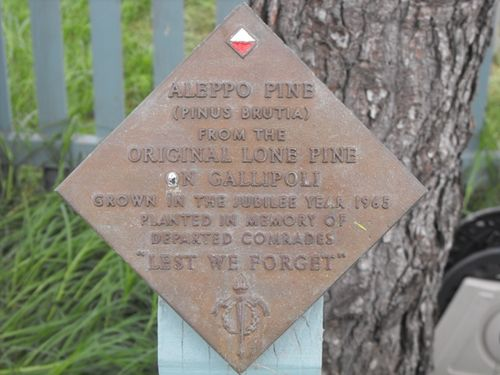 Aleppo Pine Plaque