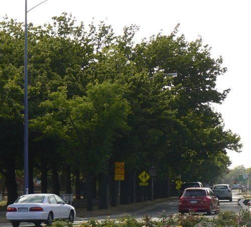 Ballarat High School Avenue of Honour : 02-January-2013
