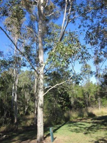 Bert Hinkler Tree : 27-05-2012