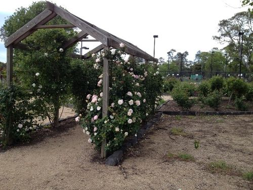 Commemorative Rose Garden : October 2013