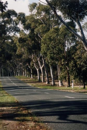Kings Park Honour Avenue