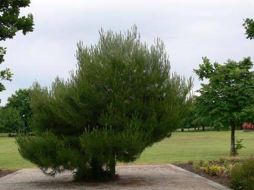 Lone Pine Memorial : 27-November-2011