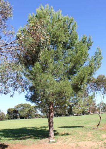Lone Pine Memorial : 06-May-2012