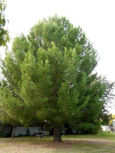 Lone Pine Memorial : 15-May-2012
