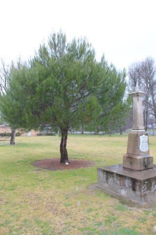 Lone Pine Memorial : 13-October-2012