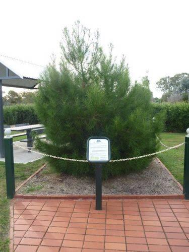 Lone Pine Memorial : 24-April-2011