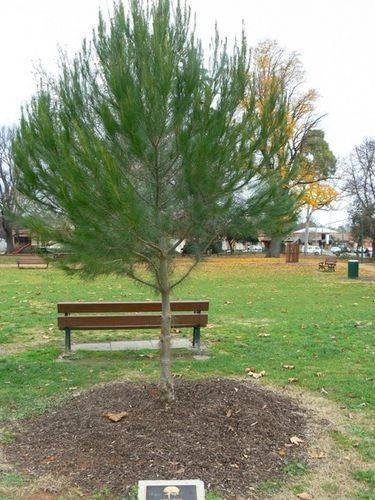 Lone Pine Memorial : 28-May-2011