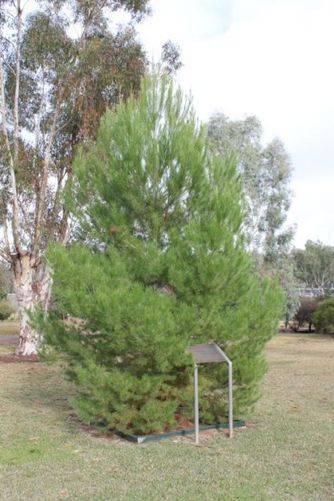 Lone Pine Memorial : 04-July-2011