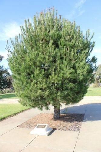 Lone Pine Memorial : 16-July-2011