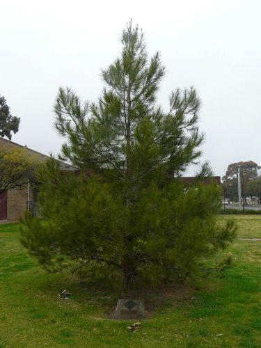 Lone Pine Memorial : 10-August-2011