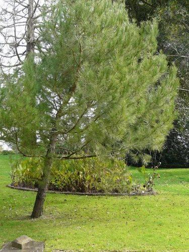 Lone Pine Memorial : 25-August-2011