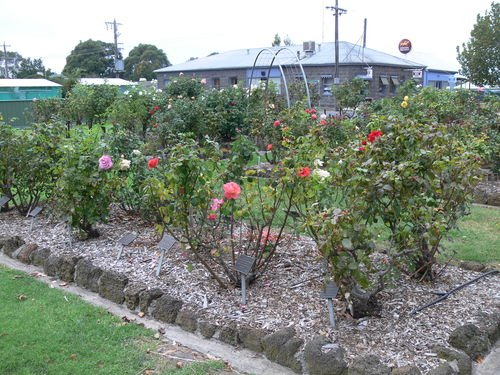 Macarthur & District Memorial Rose Garden : 14-May-2013