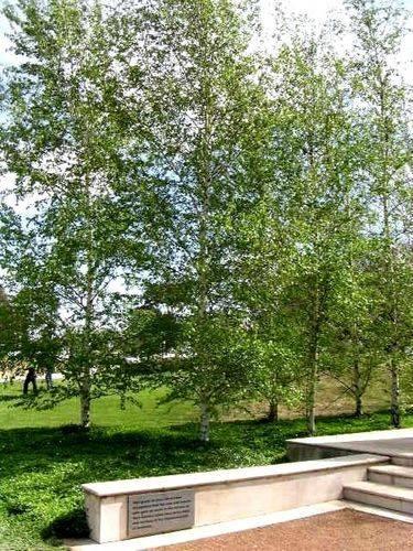 Memorial Birch Grove