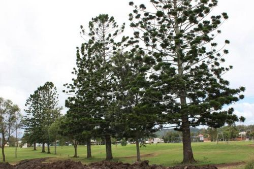Nesbitt Park Memorial Trees