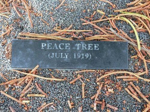 Peace Tree : 12-May-2012