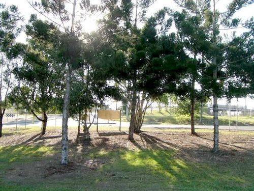 Redbank Memorial Grove