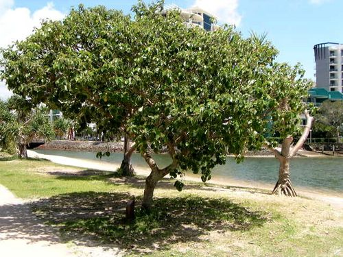 Rob Dent Tree