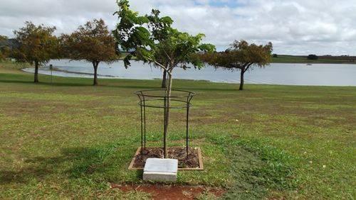 Sandakan P.O.W. Tree : 05-07-2013