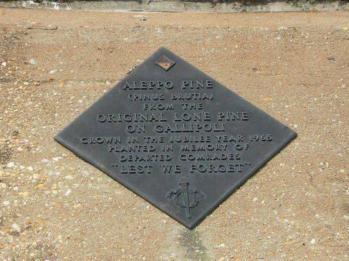 St Arnaud Aleppo Pine