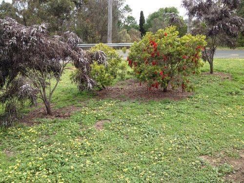 St Thomas Memorial Garden : November 2013