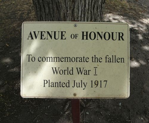 Wallace Street Avenue of Honour : 18-February-2012
