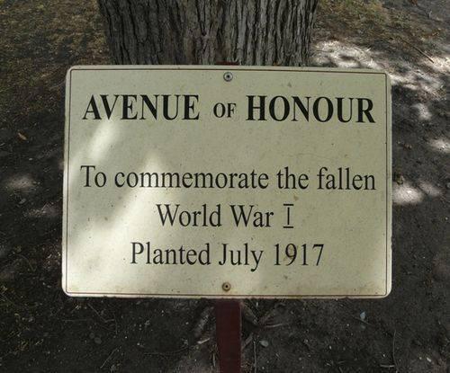 Wallace Street Avenue of Honour : 18-February-2012