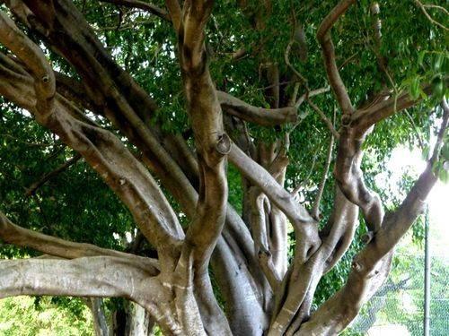 Tree Closeup : 27-05-2014