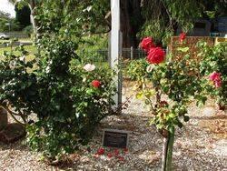 Memorial Gardens : 14-December-2014