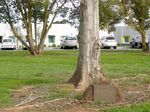 25th Anniversary Tree + Plaque : 22-04-2014