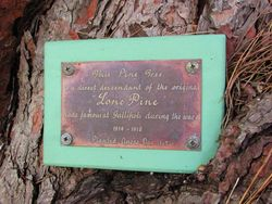 Tree Plaque : 19-December-2014