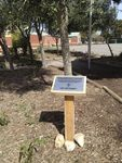 Bannockburn Primary Remembrance Garden : 27-09-2013
