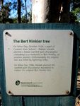 Bert Hinkler Tree Plaque : 27-05-2012