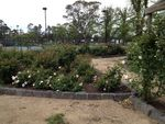 Commemorative Rose Garden 2 : October 2013