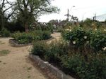 Commemorative Rose Garden 4 : October 2013
