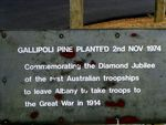 Gallipoli Pine Inscription