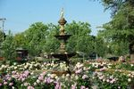 Garden of Peace Roses + Chisholm Fountain