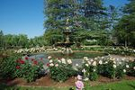 Garden of Peace Roses + Chisholm Fountain 2