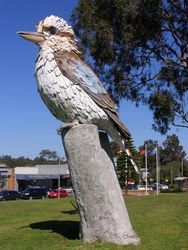 Kurri Kookaburra : 11-September-2014