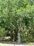 Lions Memorial Grove