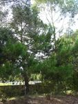 Lone Pine : 19-February-2012