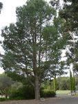 Lone Pine Memorial : 03-November-2011