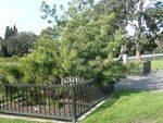 Lone Pine Memorial : 16-September-2012