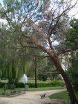 Lone Pine Memorial : 17-May-2013