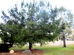 Lone Pine Memorial : 21-08-2012