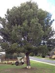 Anglesea RSL Lone Pine : 19-09-2013