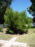 Lone Pine Memorial : 20-March-2011
