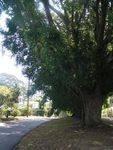 Memorial Avenue October 2012