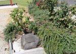 Memorial Rose Garden : 12-April-2013