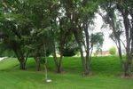 Davidson Tree 2 : July 2014